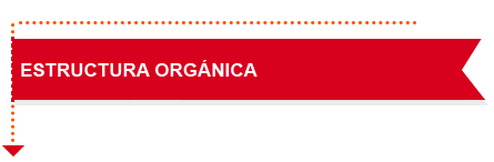 estructura-organica
